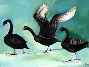 A ballet of Black Swans, 2013, by Nancy Moniz Charalambous