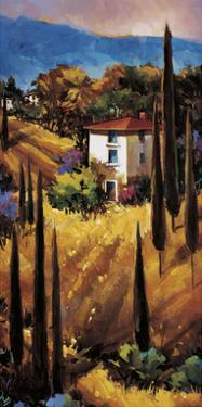 Hills of Tuscany by Nancy O'toole