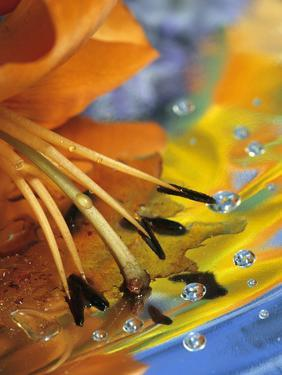 Abstract of Lily Stamens in Reflection by Nancy Rotenberg