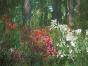 Azalea Reflection in Pond, Georgia, USA by Nancy Rotenberg