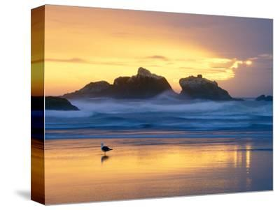 Beach at Sunset with Sea Stacks and Gull, Bandon, Oregon, USA by Nancy Rotenberg