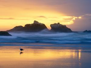 Beach at Sunset with Sea Stacks and Gull, Bandon, Oregon, USA by Nancy Rotenberg