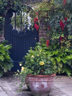 Charleston, South Carolina, USA by Nancy Rotenberg