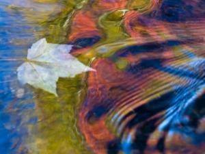Floating Maple Leaf, Bond Falls, Upper Peninsula, Michigan, USA by Nancy Rotenberg