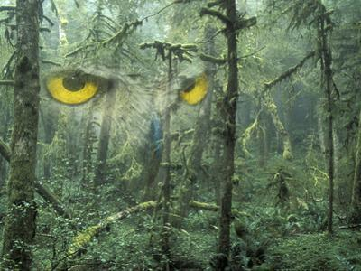 Montage, Owl, Forest, Oregon, USA by Nancy Rotenberg