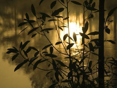 Sunrise Reflected in Pond, Callaway Gardens, Georgia, USA by Nancy Rotenberg