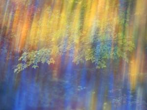 Trees Reflected in Car Window by Nancy Rotenberg