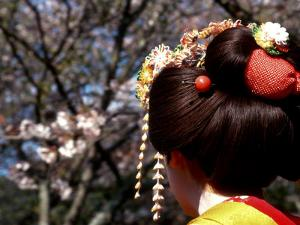 Close-up of Geisha on Philosophers Path, Kyoto, Japan by Nancy & Steve Ross