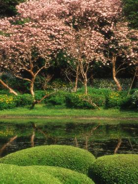 Reflecting Pond, Imperial Palace East Gardens, Tokyo, Japan by Nancy & Steve Ross