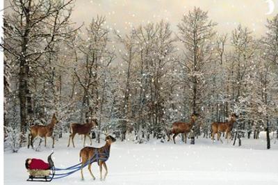 Deer In Forest by Nancy Tillman