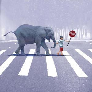 Elephant Crossing by Nancy Tillman