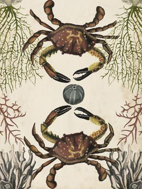 Antiquarian Menagerie - Crab by Naomi McCavitt
