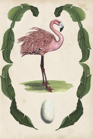 Antiquarian Menagerie - Flamingo I