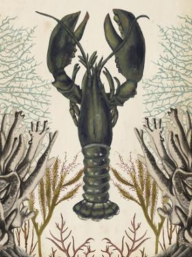 Antiquarian Menagerie - Lobster by Naomi McCavitt