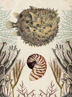 Antiquarian Menagerie - Puffer Fish by Naomi McCavitt