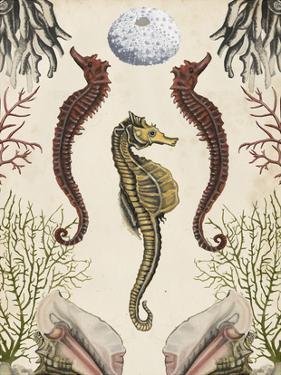 Antiquarian Menagerie - Seahorse by Naomi McCavitt
