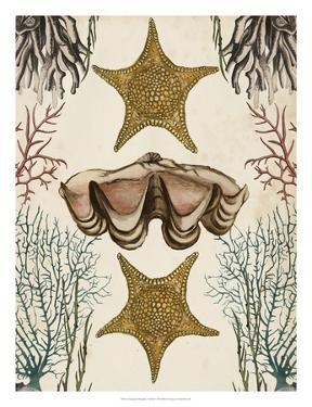 Antiquarian Menagerie - Starfish by Naomi McCavitt