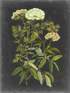 Bookplate Floral I by Naomi McCavitt