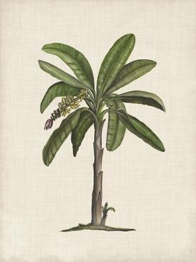 British Palms II by Naomi McCavitt
