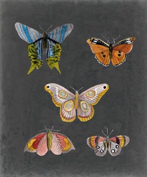 Butterflies on Slate II by Naomi McCavitt