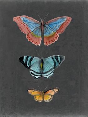 Butterflies on Slate III by Naomi McCavitt