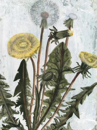 Dandelion Patina II