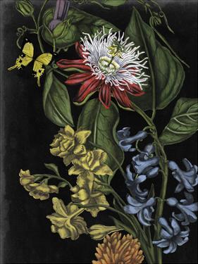 Dark Floral III by Naomi McCavitt