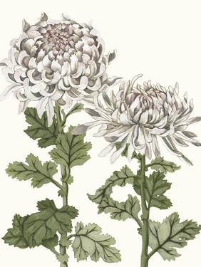 Early Spring Chrysanthemums II by Naomi McCavitt