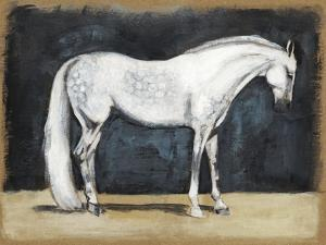 Equestrian Studies V by Naomi McCavitt