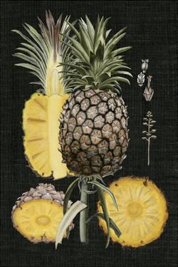 Graphic Pineapple Botanical Study II by Naomi McCavitt