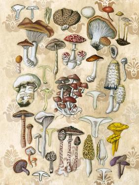Mycological Study by Naomi McCavitt