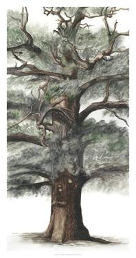 Oak Tree Composition I by Naomi McCavitt