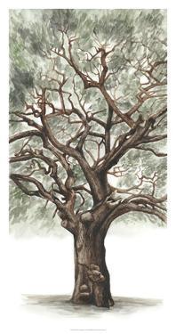 Oak Tree Composition II by Naomi McCavitt