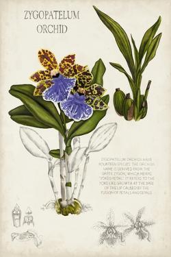 Orchid Field Notes II by Naomi McCavitt