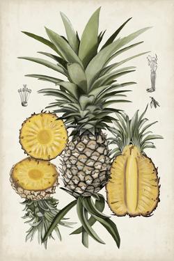 Pineapple Botanical Study I by Naomi McCavitt