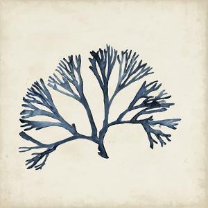 Seaweed Specimens XI by Naomi McCavitt
