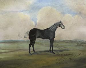"""The Kicker,"" A Steel Grey Racehorse by Naomi McCavitt"