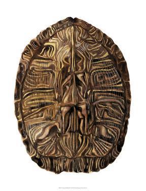 Tortoise Shell Detail II by Naomi McCavitt