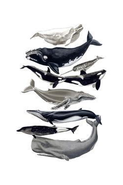 Whale Display I by Naomi McCavitt