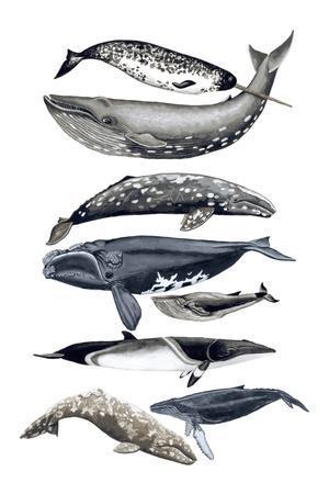 Whale Display II