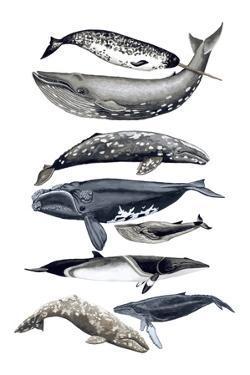 Whale Display II by Naomi McCavitt