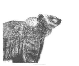 Wildlife Snapshot: Grizzly by Naomi McCavitt