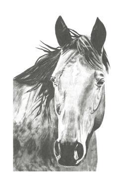 Wildlife Snapshot: Horse I by Naomi McCavitt