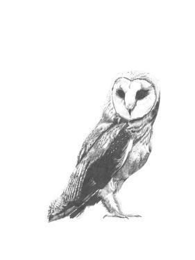 Wildlife Snapshot: Owl by Naomi McCavitt