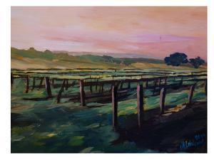 Napa Valley Vineyard During Sunset by M Bleichner