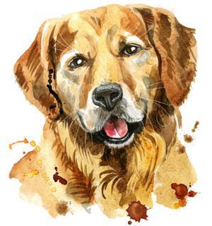Watercolor Portrait of Golden Retriever by Natalia Andreichenko