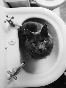 Cat Sitting In Bathroom Sink by Natalie Fobes