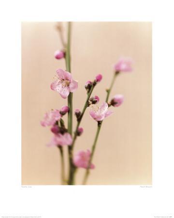 Peach Blossom by Natalie Lane