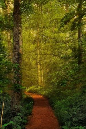 Fairytale Path
