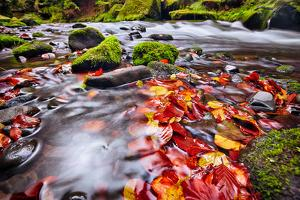 River Kamenice in Autumn with Long Exposure, Bohemian Switzerland, Czech Republic by Nataliya Hora